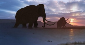 Scientists Plan to Resurrect the Woolly Mammoth This Decade